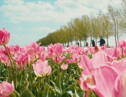 Bedrijfsfilm Tulip Tours Holland