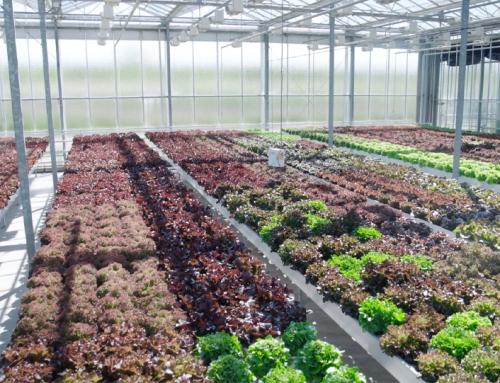Enza Zaden – Indoor farming